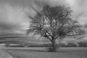 Baum im Feld – Rosdorf
