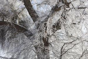 Winter-Baum – Rosdorf (Ausschnitt)